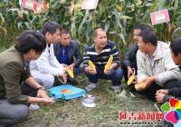 依兰镇举行玉米高产培训交流会