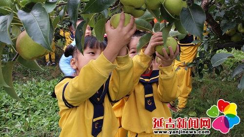 朝阳川幼儿园开展秋季采摘苹果梨活动