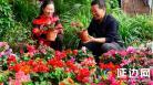 珲春市鹤翔花卉基地的花农在侍弄鲜花