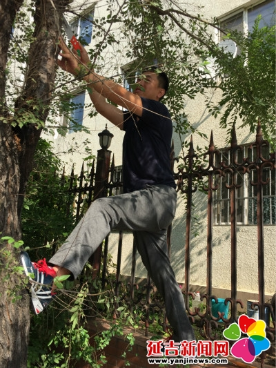 9月6日,社区工作人员带着工具,对遮挡李阿迈家光线的树木进行修剪