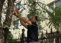 修剪遮光树枝 解决居民烦恼