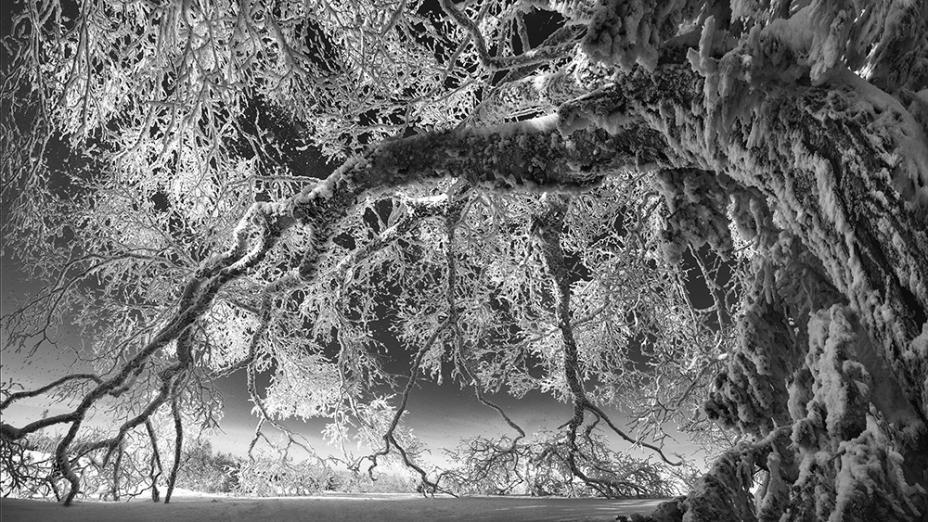 【在线影展】雪国意象——仙峰的清澄视界