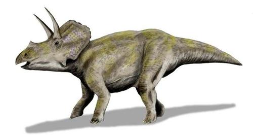 在蜥臀类中,其腰带非常类似於现生的爬行动物,其髋骨系统中