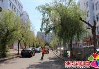 进学街道联合市园林局开展 春季打药除虫活动