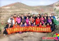杨柳社会服务中心开展采摘苹果体验活动