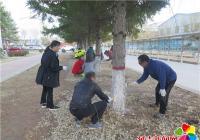 """校区共建活动之为大树穿上""""防护衣"""""""