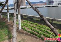 强力整治河堤种菜 呼吁居民共同维护