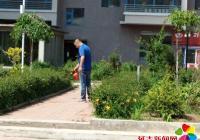 民旺社区周围喷洒除草剂   美化社区环境