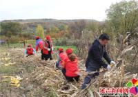 志愿服务收玉米 惠民实事暖人心