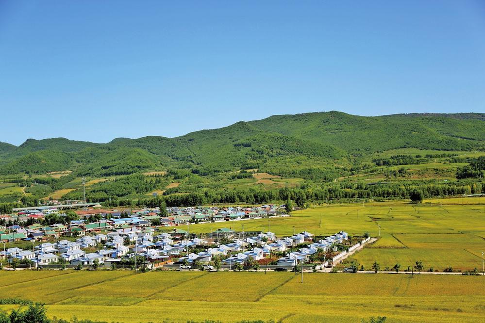 朝阳镇八道村整村土地经营权流转为村民摆脱贫困