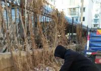"""延春社区 开展""""清洁家园保护环境""""志愿服务活动"""