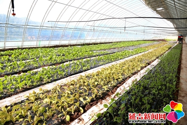 """延吉今年全力推进""""现代农业+""""增强农业综合实力"""