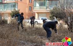 创文明城党员带头做表率 清除杂草营造良好生活环境