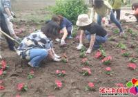 废弃花坛植新绿 区域共建助创城
