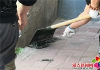 社区居民携力抓蛇 排除安全隐患