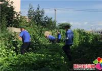 居民路边私种菜地  部门联合整治环境