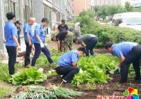 清理小菜地 美化大环境