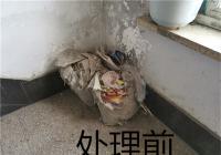 白新社区清理楼道乱堆乱放 美化环境消除隐患
