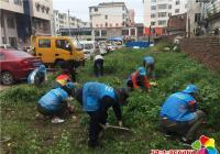 白桦社区清理茂密杂草 争创宜居城市