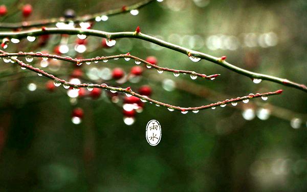 【节气•雨水】愿春回大地时 山河无恙 人间皆安