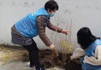 小营镇东光村组织志愿者开展植树活动