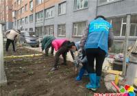 """白菊社区开展""""绿化种花 建设美好家园""""志愿服务活动"""