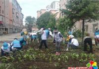 白菊社区:花卉种植 展巾帼风采