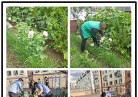 居民院中非法种植罂粟社区联合派出所当场铲除