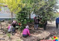依兰镇台岩村组织开展创建文明城市主题党日志愿服务活动