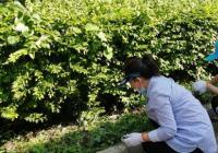 拔草护绿 志愿者用行动守护美丽游园