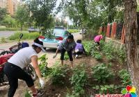 北山街道丹明社区集中整治毁绿种菜行为