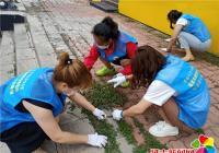 拔草除杂助力创城 清洁环境美化家园