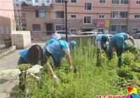 清理花坛杂草 扮靓小区环境