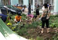 """文广旅局携手白丰社区开展""""花坛种菜""""专项整治行动 对绿地种菜说"""