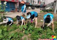 市公交集团联手春光社区 清理花坛杂草 助力创建文明城