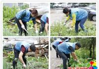 重拳打击毁绿种菜集中整治还绿于民