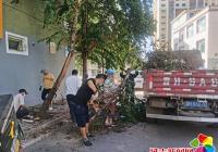 及时清除障碍树木 解除居民安全隐患