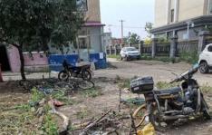 小营镇以绿化和美化为抓手,吹响东阳社区片区宜居环境提升冲锋号