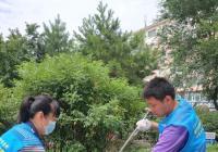 新兴街道志愿者修剪绿植助力美化环境
