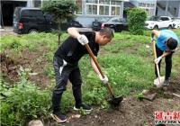 驻街单位市林管局进社区清理小区花坛助力创城精细化管理