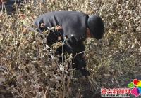 白山社区开展秋季拔除枯花志愿服务活动