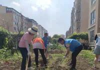 """延虹社区开展""""我为群众办实事绿化种花美环境""""志愿服务活动"""