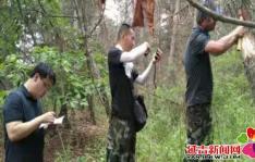 朝阳川镇林业部门扎实开展林木病虫害防治工作