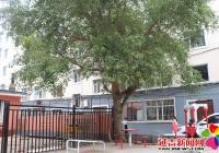 树木生长有隐患 社区清障解民忧
