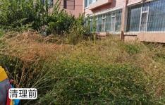 河南街道机关干部进社区 凝心聚力美化辖区环境