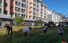 """长林社区开展""""清洁家园 从我做起""""志愿服务活动"""